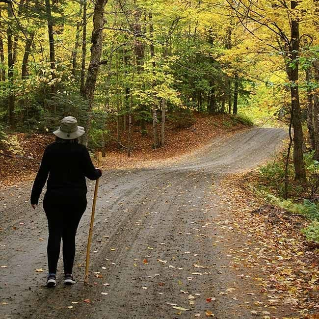 A woman in walking apparel with a walking stick standing on the path surveying her upcoming hike. Brown and gold leaves on ground contrast with golden leaves on trees.
