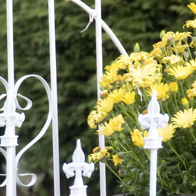 Golden wildflowers growning next to a wraught iron decorative fence or trellise.